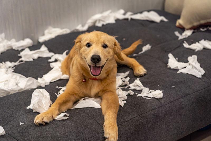 Tierhalter Haftpflicht Tierhaftpflicht Rosenheim